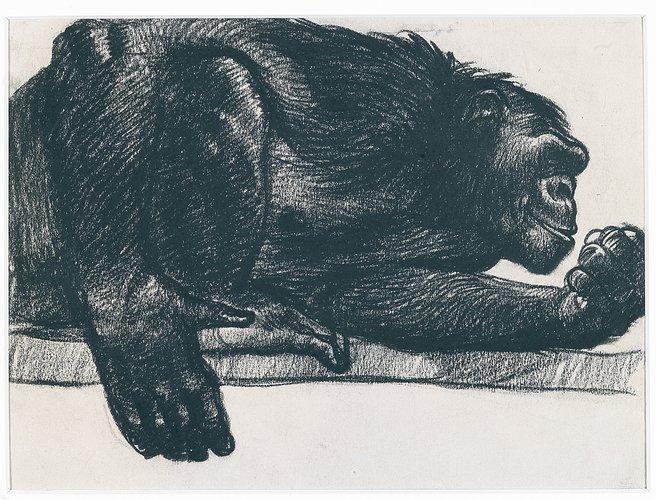 Romano Dazi - Scimpanzè